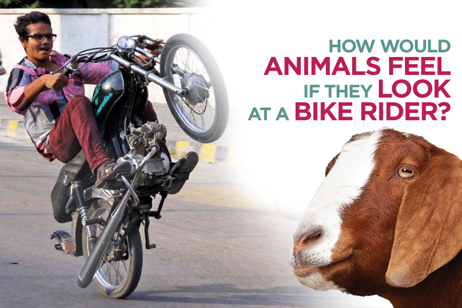 How Would Animals Feel if They Look at a Bike Rider 2