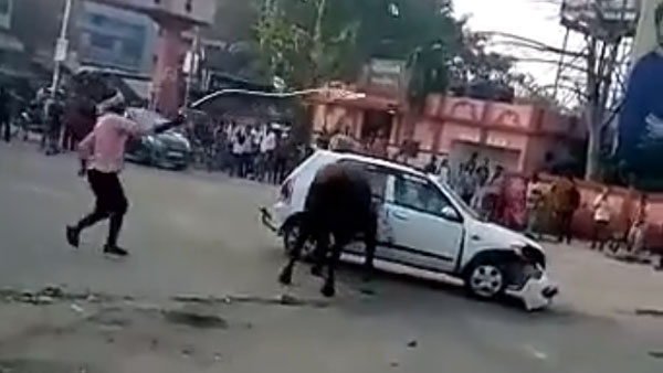 Angry Bull Didn't Liked Suzuki Alto 4